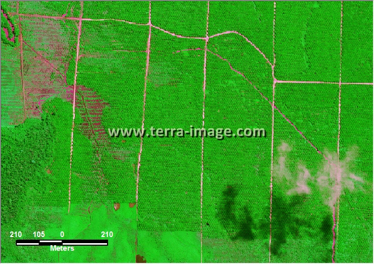 citra satelit worldview-2 green color sangkuliran kutai