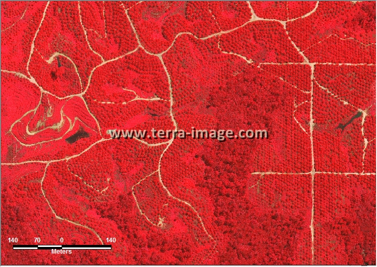 citra satelit worldview-2 red kutai timur