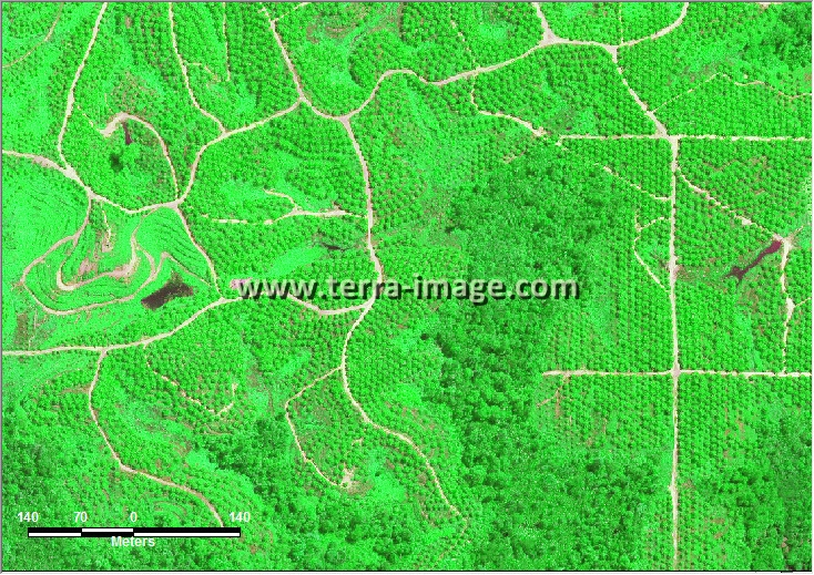 citra satelit worldview-2 green kutai timur