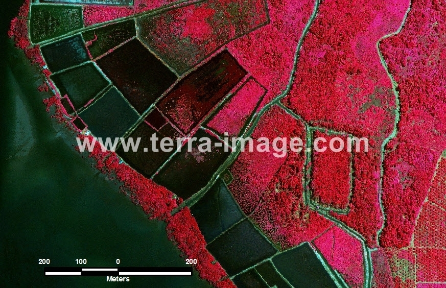 42 Luwu Timur GeoEye1 Red Color Citra Satelit