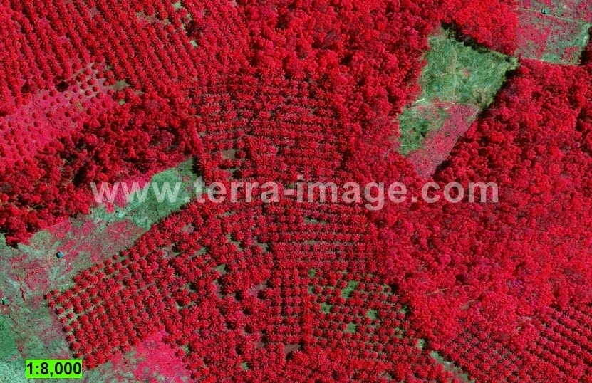 21-geoeye1-red-rokan-hulu-citra-satelit